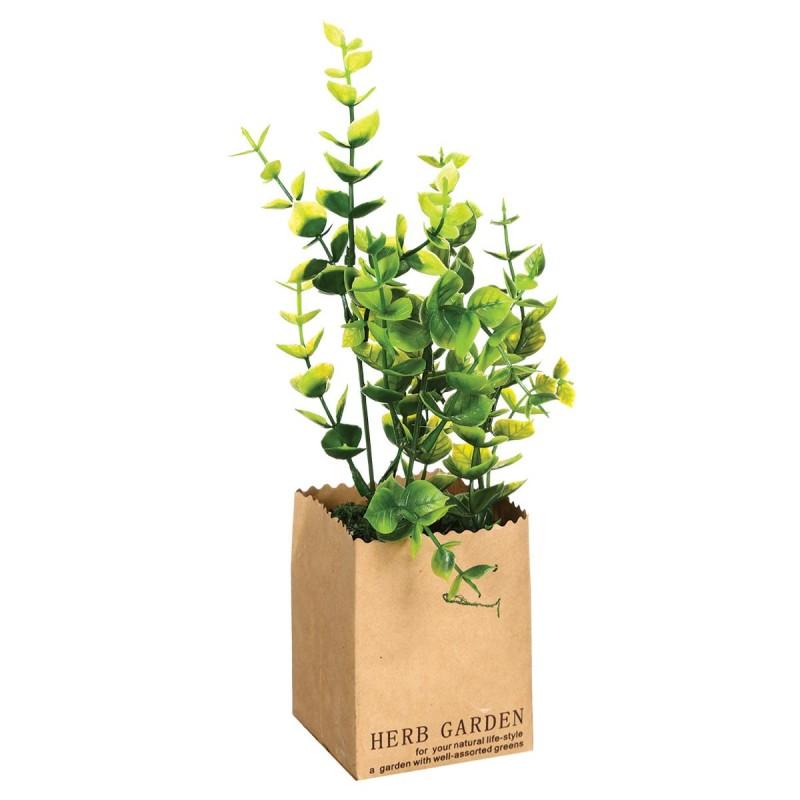 pot plante