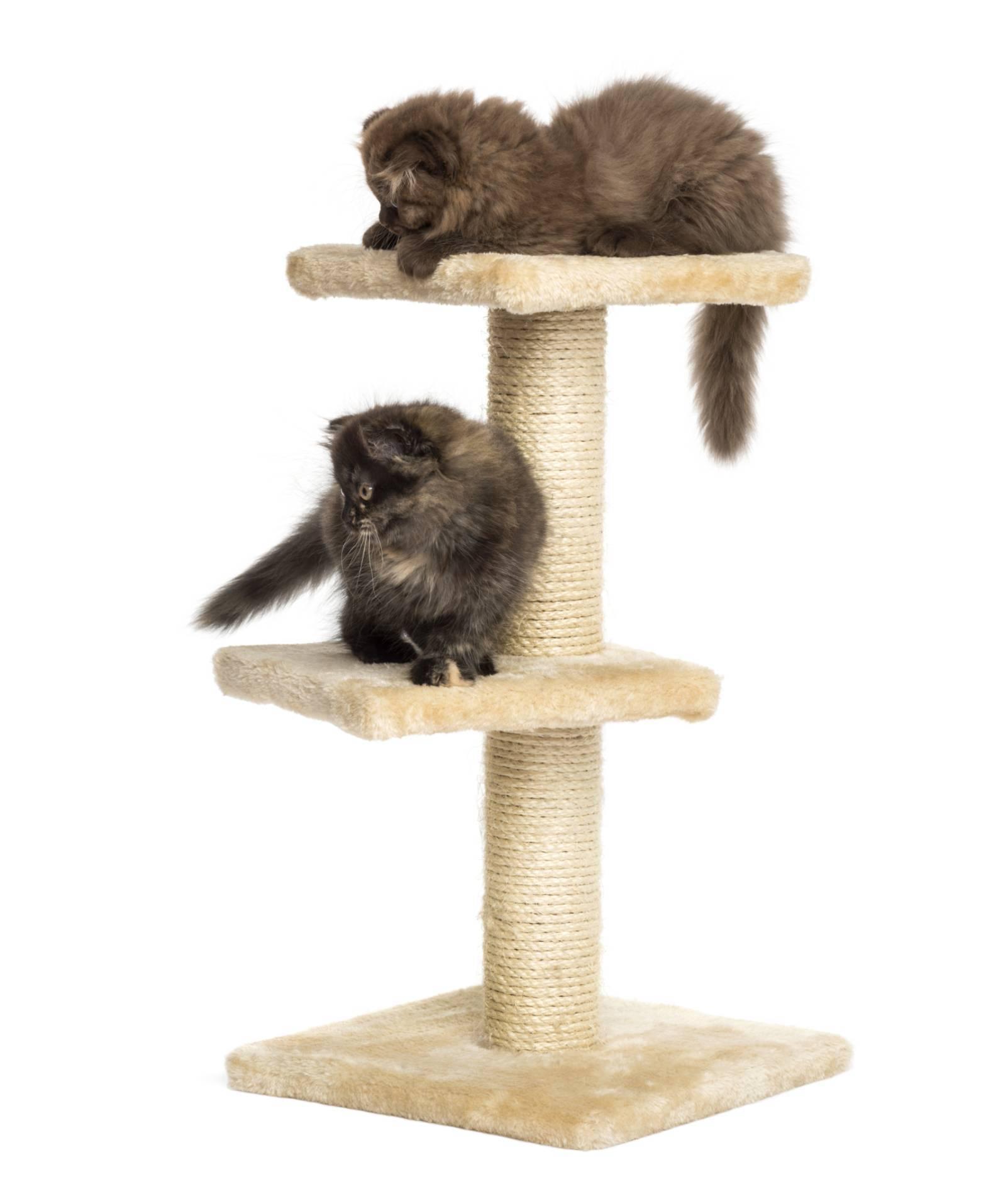 arbre a chat pour chaton