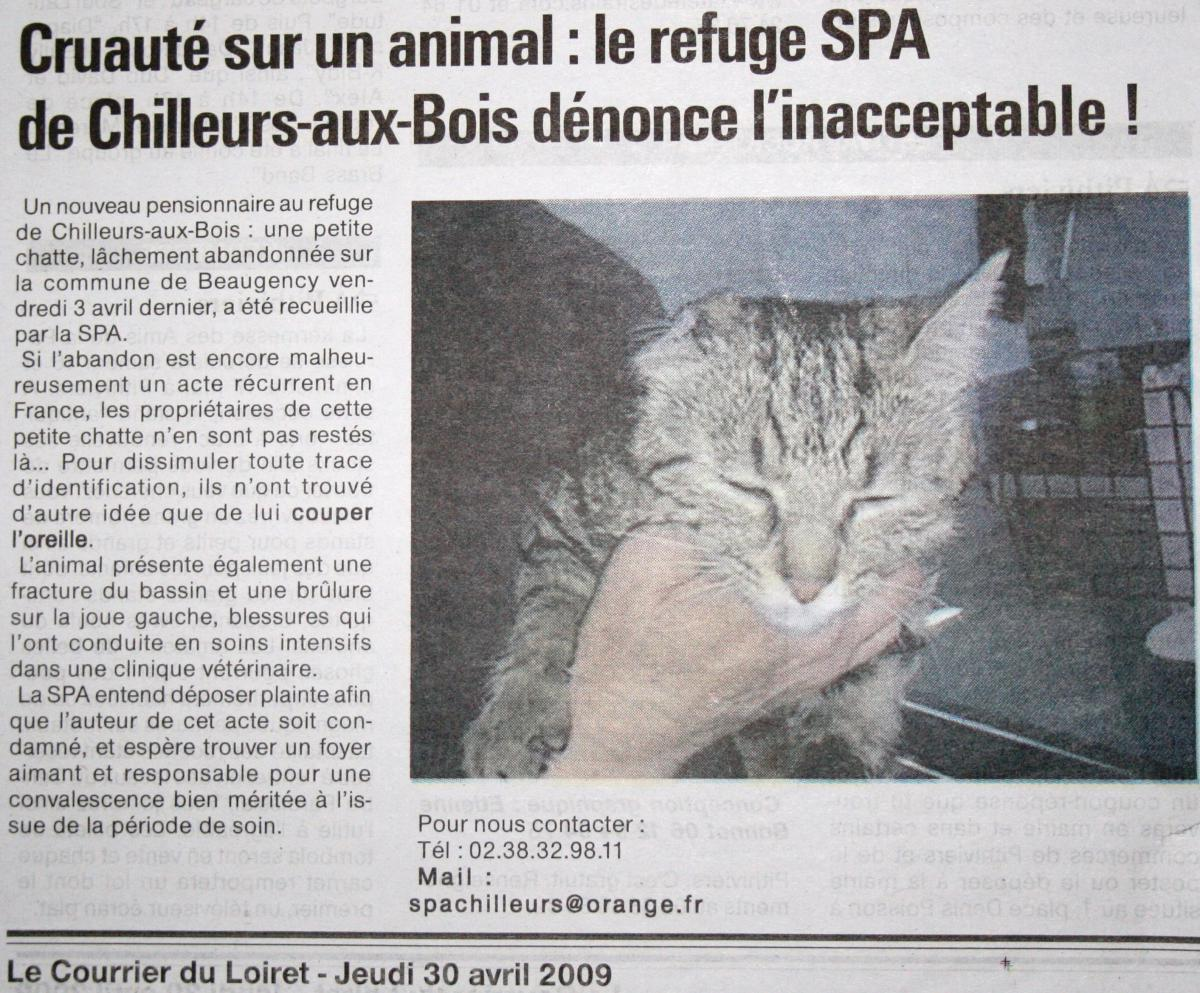 article animaux