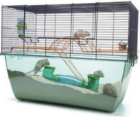 cage gerbille