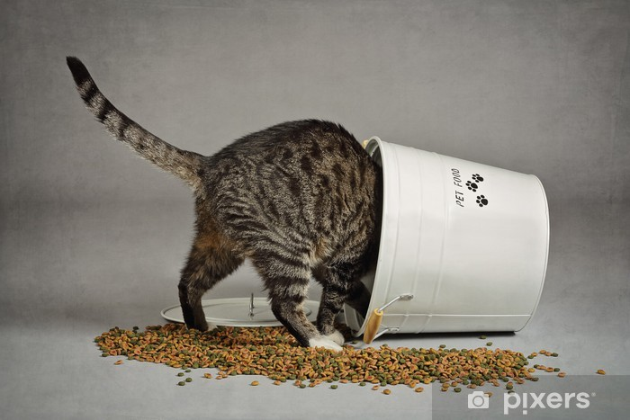 chat croquette