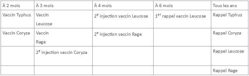 chat vaccin