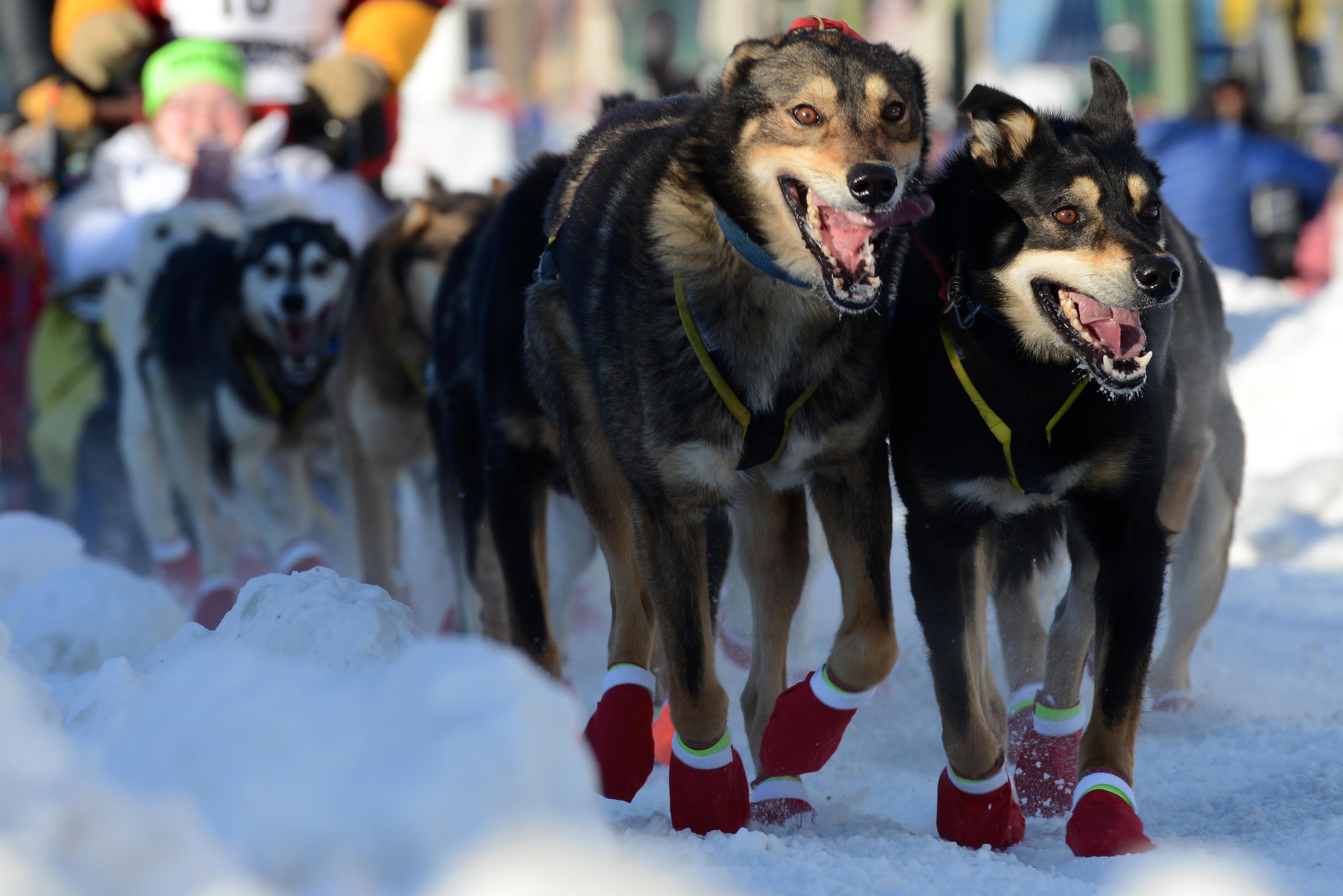 chausson pour chien neige