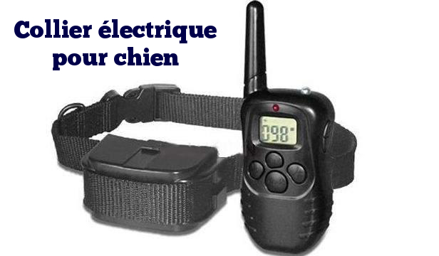 collier electrique pour petit chien