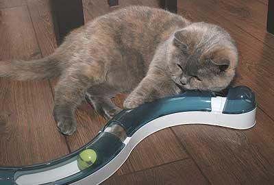 jouets pour chats d appartement
