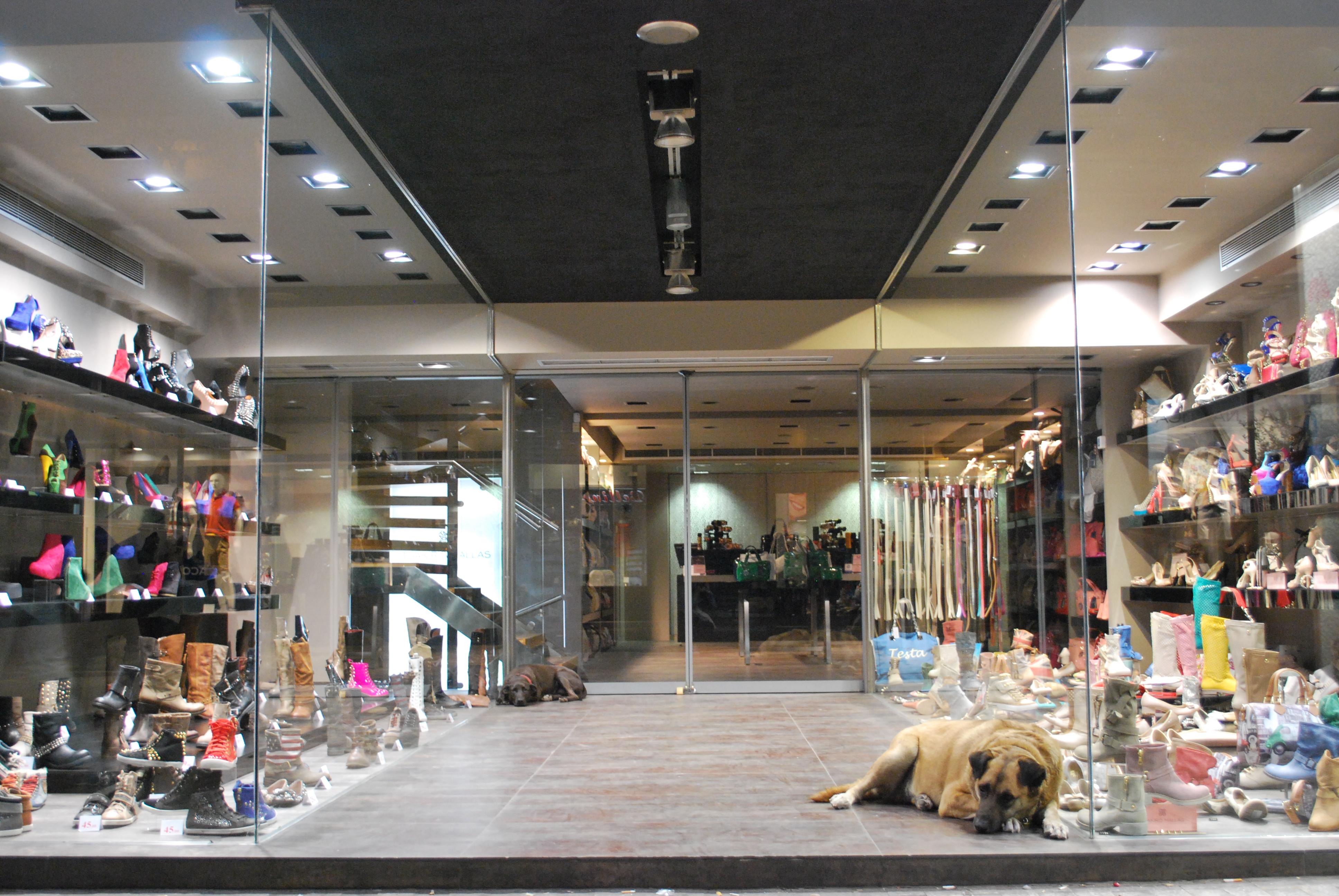 magasin de chien