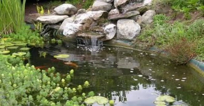 bassin a poisson avec cascade