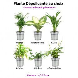 plante d intérieur dépolluante