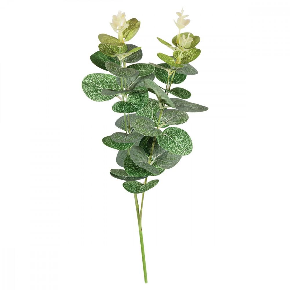 branche d eucalyptus